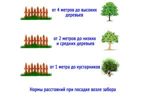 Нормы посадки деревьев, кустарников и земляники