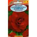 Бегония Камелия темно-красная крупноцветковая