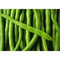 Фасоль овощная Креолка