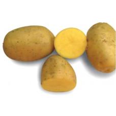 Картофель Крона (Кроне) 1 кг. 1 репр.
