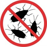От домашних насекомых