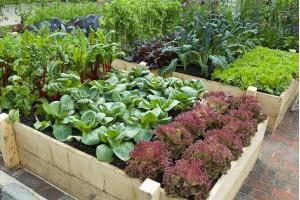 Красивый огород своими руками - это возможно!
